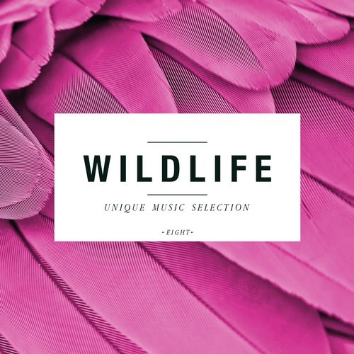 VA - Wildlife - Unique Music Selection, Vol. 8 [HIFICOMP243]